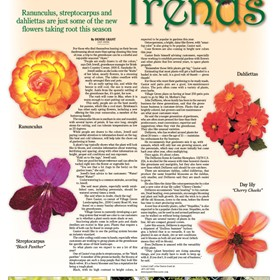 Print Designs For Publication: Growing Trends